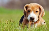 Dog Medical Insurance - Protecting Your Pup's Health