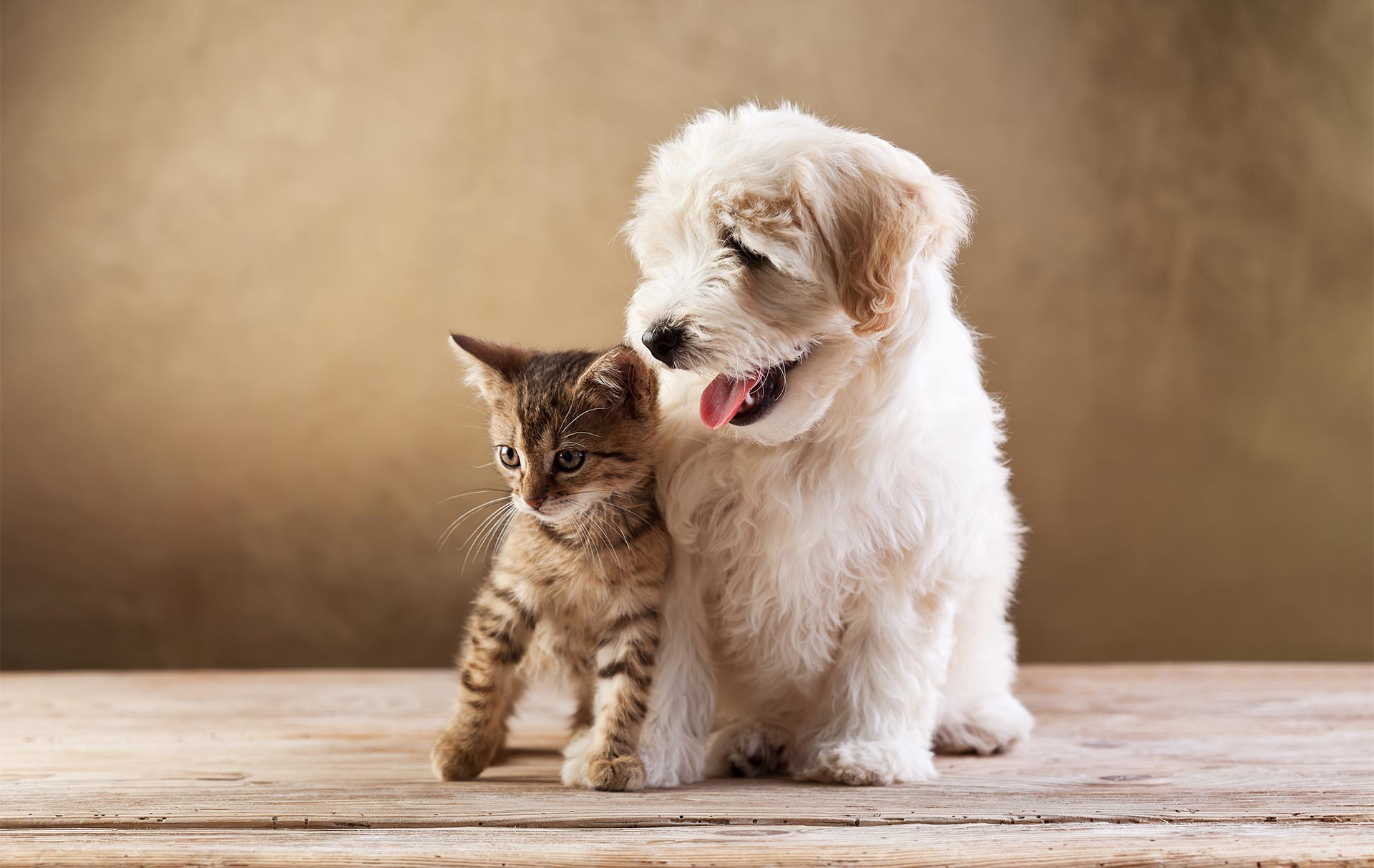 Pet Insurance Online - Save Yourself the Grief of Expensive Vet Bills